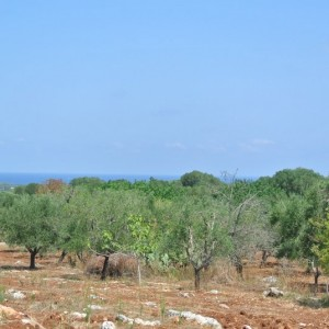 Plot of land with sea views for sale in Carovigno
